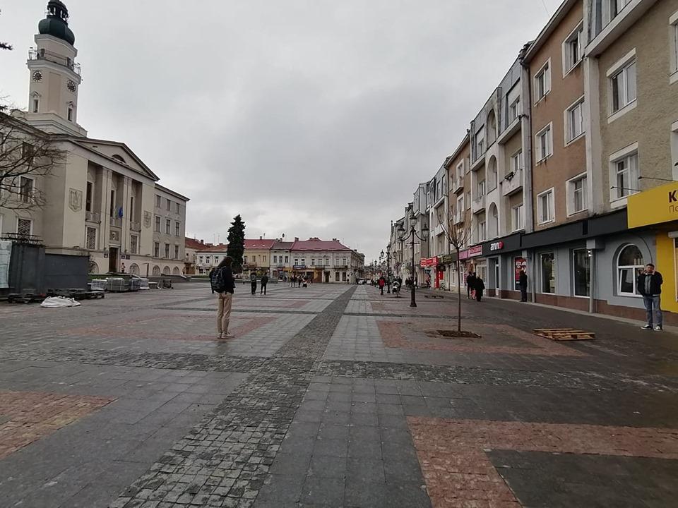 Перші нові дерева висадили на площі Ринок у Дрогобичі натомість зрізаних старих