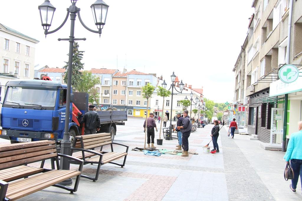 Дерева на площі Ринок, які не забрунькувалися, замінили на нові