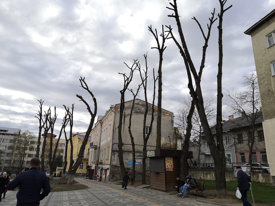 Роз'яснення щодо кронування дерев на площі Василя Стефаника