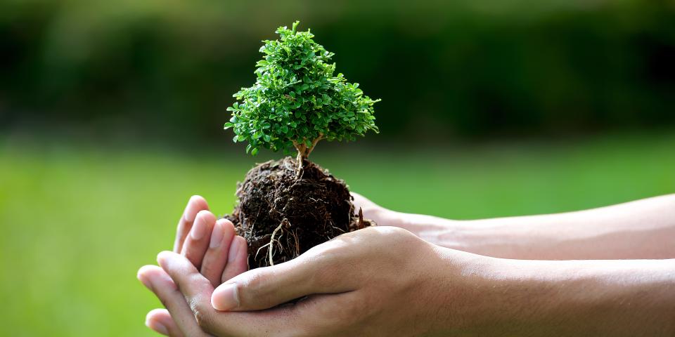 «Озеленення планети»: Які заходи відбудуться у Дрогобицькій громаді (Внесено зміни)
