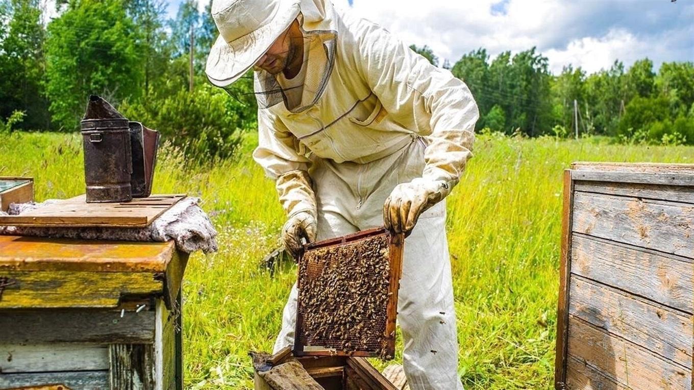 Розпочато прийом документів для отримання дотацій за бджолосім'ї